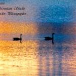 alexander_geese