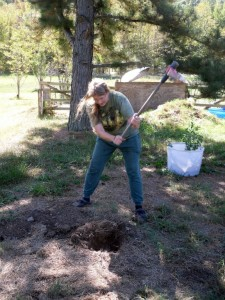 Jeanette chops a hole in the rocky soil with a hoe