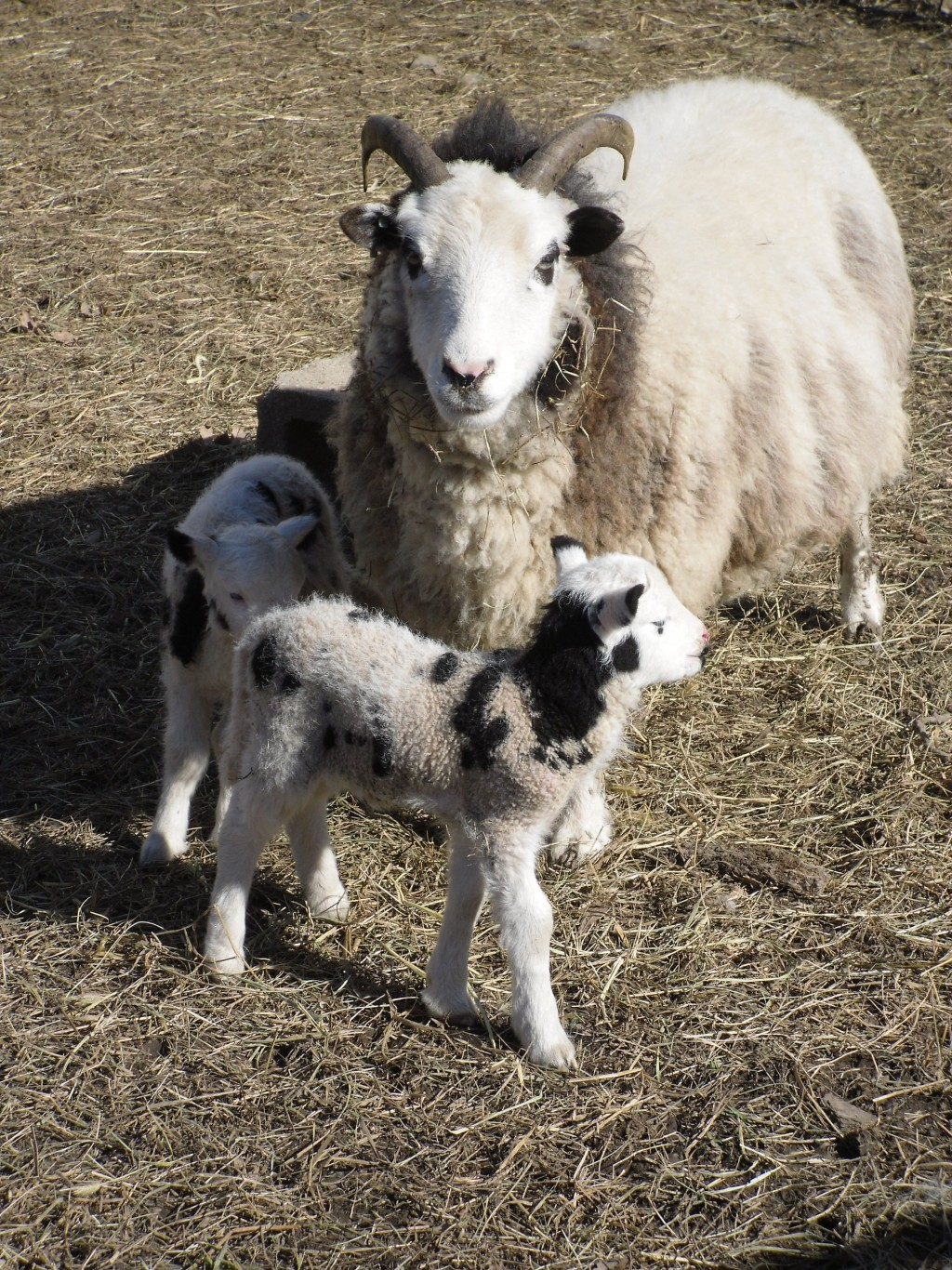 sheep dating website Black sheep dating mens lifestyle  save my name, email, and website in this browser for the next time i comment  .