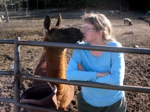 Pequena, the llama, gives Jeanette kisses