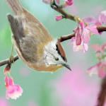 spring painting of bird